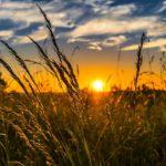 Stymulatory wzrostu w branży rolnej